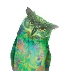 The Green Owl